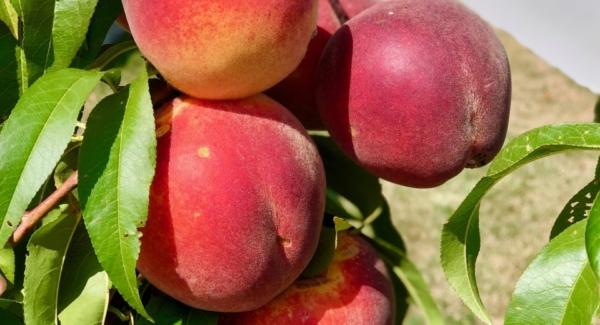 How to Freeze Ripe Peaches