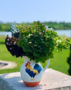 Things to do With All That Kale