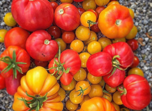 14 Ways to Make the Most of Your Garden Tomatoes